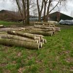 bomen kappen Herwijnen 1