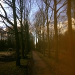bomen snoeien lingebos vuren